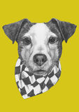 Original drawing of Jack Russell with scarf. Isolated on colored background Stock Photo