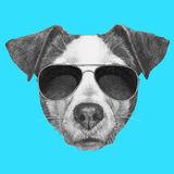Original drawing of Jack Russell with sunglasses. On colored background Royalty Free Stock Photo