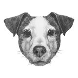 Original drawing of Jack Russell. Stock Photo