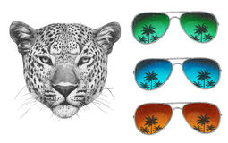 Original drawing of Leopard with mirror sunglasses. Isolated on white background Stock Image