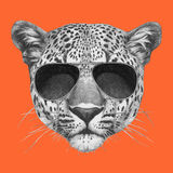 Original drawing of leopard with sunglasses. On colored background Royalty Free Stock Images