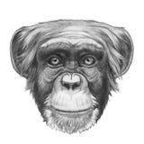 Original drawing of Monkey. Isolated on white background Stock Photos