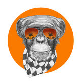 Original drawing of Monkey with scarf and mirror sunglasses. Isolated on colored background Royalty Free Stock Image
