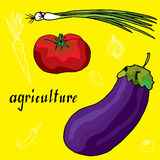 Original drawing of onion, chilly pepper, tomato and eggplant Stock Photos