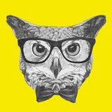 Original drawing of Owl with glasses and bow tie. On colored background Royalty Free Stock Photos