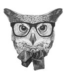 Original drawing of Owl with glasses and bow tie. Isolated on white background Stock Photography