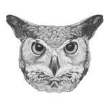 Original drawing of Owl. On white background Stock Image
