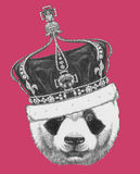 Original drawing of Panda with crown. On colored background Royalty Free Stock Image