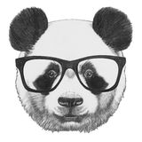 Original drawing of Panda with glasses. Isolated on white background Royalty Free Stock Photo
