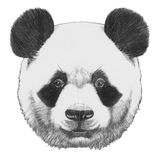 Original drawing of Panda. Isolated on white background Royalty Free Stock Photography