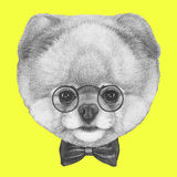 Original drawing of Pomeranian dog with glasses and bow tie. On colored background Stock Images