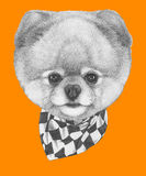 Original drawing of Pomeranian dog with scarf. On colored background Stock Image