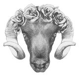 Original drawing of Ram with roses. On white background Stock Image