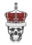 Original drawing of Skull with crown. On white background Stock Image