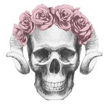 Original drawing of Skull with roses and horns. Isolated on white background Royalty Free Stock Photos