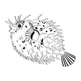 Original drawing of spine porcupine fish. Also know as spiny/puff balloon fish Royalty Free Stock Images