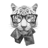 Original drawing of  Tiger with glasses. Isolated on white background Stock Photos
