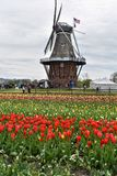 Original Dutch Windmill in Holland, Michigan at Tulip Festival Time stock photos