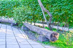 Original empty wooden bench in the park. Summer. Russia royalty free stock photography