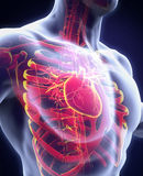 original för illustration för anatomihandhjärta målad mänsklig Arkivfoton