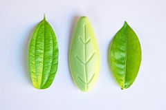 Original and fake objects (leaves) next to each other Stock Photo
