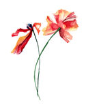 Original floral background with colorful Poppies flowers. Original floral background with Poppies flowers, watercolor illustration Royalty Free Stock Photos