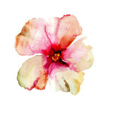 Original floral background with flower Royalty Free Stock Image