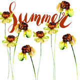 Original floral background with flowers and title Summer Royalty Free Stock Photos
