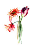 Original floral background with Poppy and Tulip and Gerber flowe. Rs, Watercolor painting Royalty Free Stock Photos