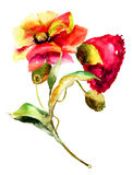 Original flowers watercolor illustration Royalty Free Stock Photos
