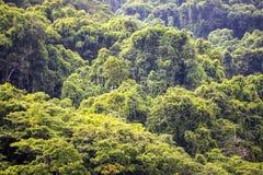 Original forest, Nosi Mangabe, Madagascar Stock Images