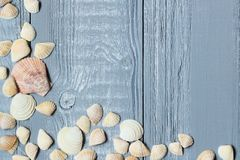 Original a frame for the text of the seashells on blue wooden background Royalty Free Stock Photo