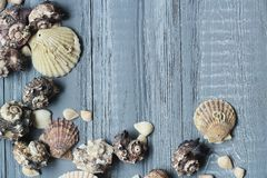 Original a frame for the text of the seashells on blue wooden background Royalty Free Stock Images