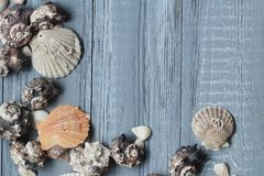 Original a frame for the text of the seashells on blue wooden background Royalty Free Stock Photos