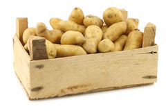 Original french rattepotatoes (Solanum tuberosum) Royalty Free Stock Photo