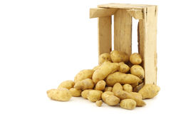 Original french rattepotatoes (Solanum tuberosum) Royalty Free Stock Photography