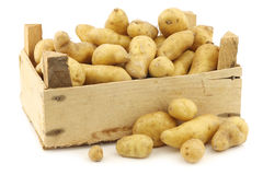 Original french rattepotatoes (Solanum tuberosum) Stock Photo