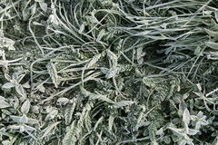 Original grass and plants pattern Royalty Free Stock Image