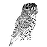 Original Hand drawing of Owl Royalty Free Stock Image