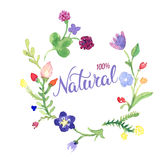 Original hand lettering Natural and eco design elements. Handmad. Original hand lettering Natural and flower watercolor design elements. Handmade calligraphy Royalty Free Stock Photography