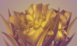 Original Imitation Gold Irises. Royalty Free Stock Images