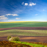 Original Lanscape of Colorful fields Royalty Free Stock Image