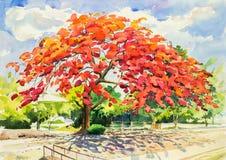 Original- målninglandskap för vattenfärg och härligt av träd för påfågelblomma Arkivbilder