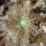Macro marine background; octacoral polyp details Stock Photography
