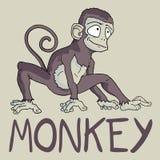 Original monkey Stock Images