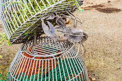 Original ornament in a fishing port, an iron lobster in lobster royalty free stock photography