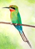 Original painting of a beautiful Blue tailed bee eater Stock Photography