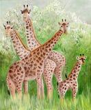 Original painting of beautiful Giraffes at Masai Mara National Park. Beautiful acrylic painting of a herd of Giraffes at Masai Mara bushes Royalty Free Stock Photography