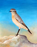 Original painting of a beautiful Isabelline Wheatear, Bahrain Stock Photo