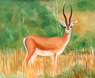 Original painting of a beautiful male Thomson's Gazelle Stock Photo